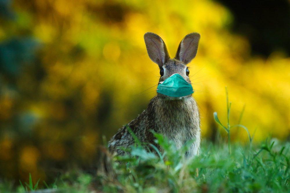 Zdrowych spokojnych Świąt Wielkanocnych